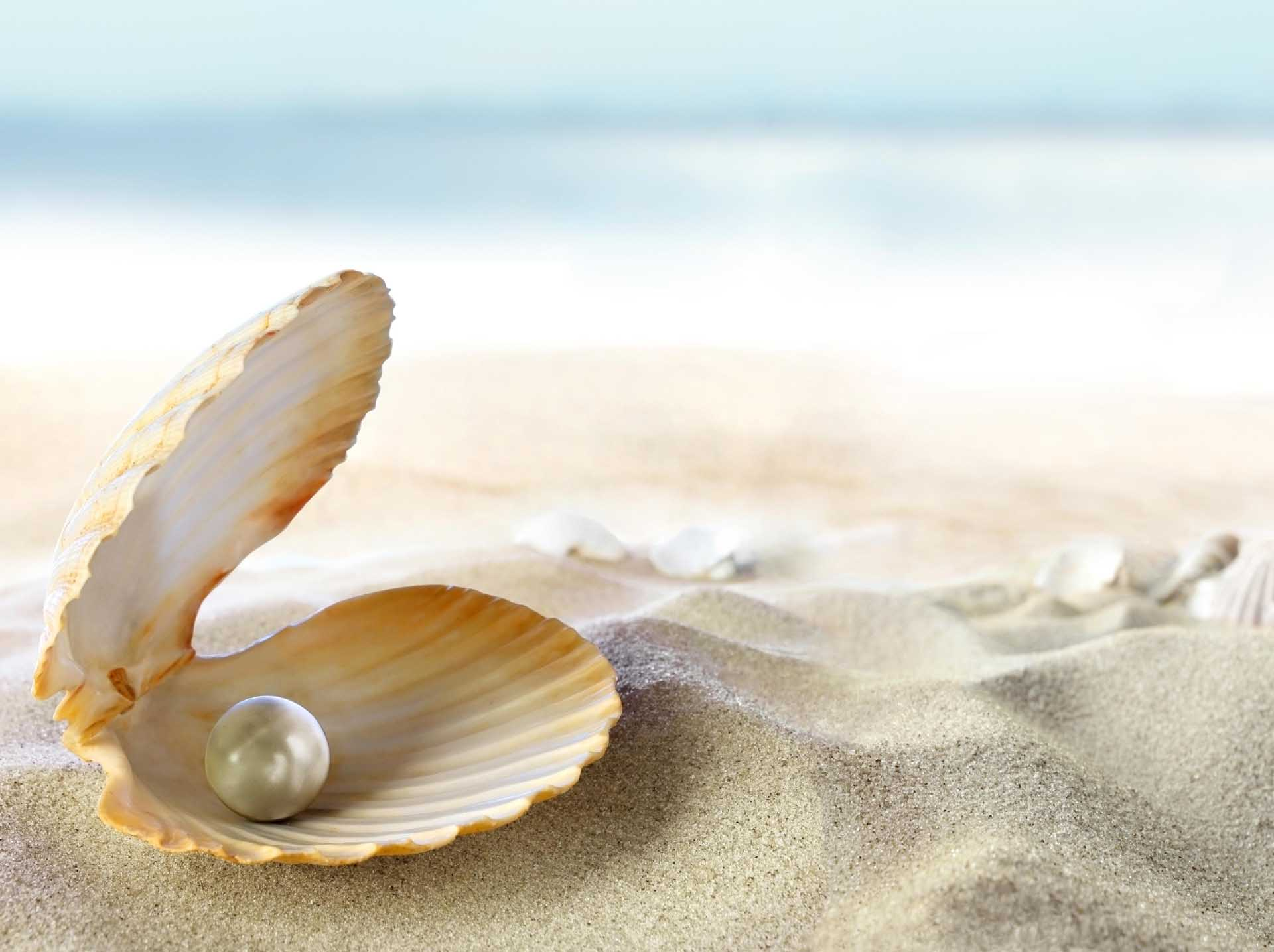Pearl-In-Shell-Latest-HD-Wallpapers-Free-Download-1